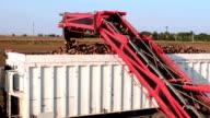 Sugar beet loading ramp video
