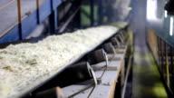 Sugar Beet on Conveyor Belt video