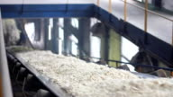Sugar Beet on Conveyor in Factory video