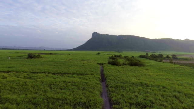 Sugar Cane Farming  in front of Mountain at Dusk. video