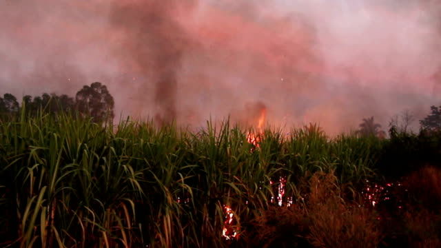 Sugar Cane Fire video