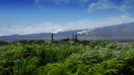 Sugarcane Field and Refinery (Hawaii) video