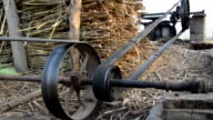 Sugarcane Plant video