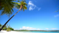 Summer Beach with Coconut Palm Tree video