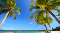 Summer Beach with Coconut Palm Trees video