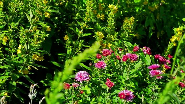 Summer beautiful flowers swaying in wind video