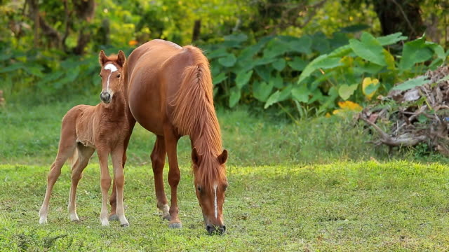 Summer country landscape with horse and foal at green field. video