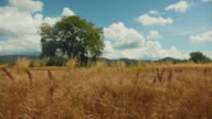 Summer countryside landscape in Italy video