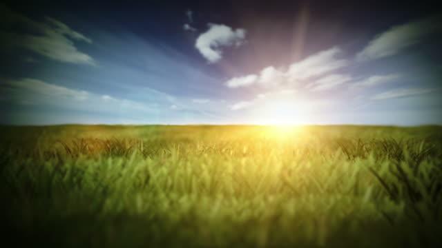 Summer field video video