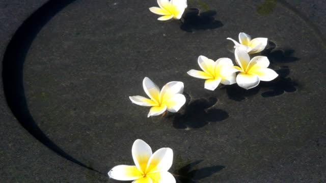 Summer flowers video