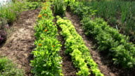 summer garden with vegetable and medical herbs video