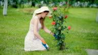 Summer in my garden video