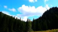 summer landscape pine forest in the Carpathians video