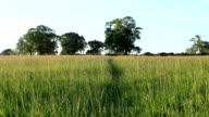 Summer Meadow video