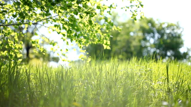 Summer park. Green grass, leaves and sunrays. Dolly Shot video