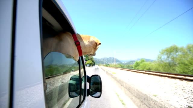 Summer road trip video