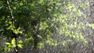 Summer Strong Rainfall video
