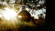 Summer Sunset Under An Old Oak Tree video