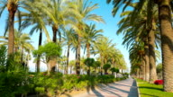 Summer vacations, palm trees alley video