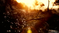 summer white flowers in sunset with flare video