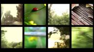 Summertime composite video