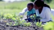 Summertime Gardening video