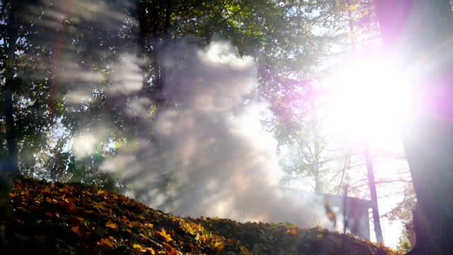 Sun and smoke in the forest video