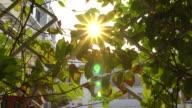 4K ,Sun beaming between the leaves in city garden. video