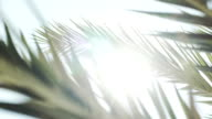 Sun breaking through palm trees in slowmotion video