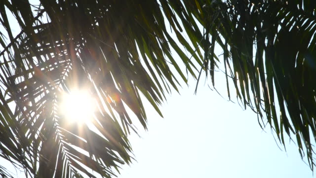 Sun flare and palm video