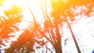 Sun flare over trees HD video