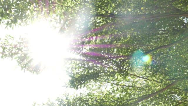 Sun flare tree video