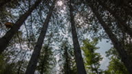 Sun Gleams Beautifully Through the Forest Time Lapse video
