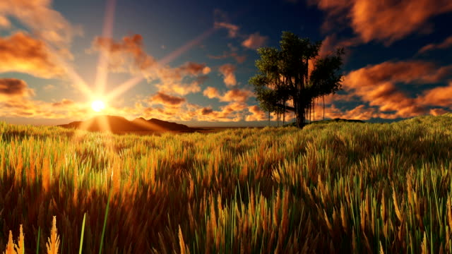 Sun Goes Down Beautiful Single Tree At Sunset video