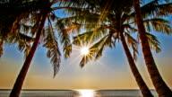 Sun in palm tree video