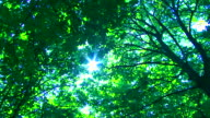 Sun in Trees video