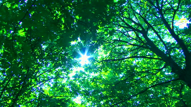 Sun in Trees video