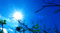Sun light and tree branch planning video