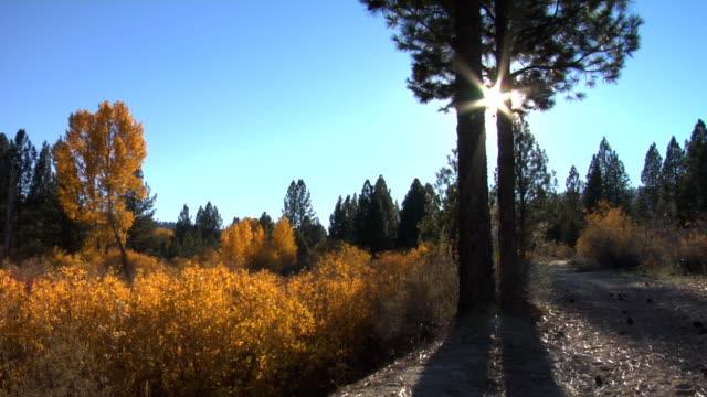 Sun peeks through trees video