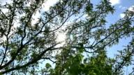 sun ray tree video
