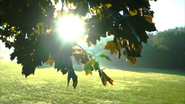 Sun rays through leaves as camera moves down video