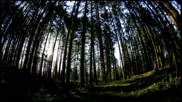Sun Rising in Forest (Video) video