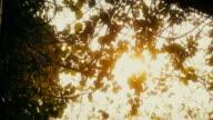 Sun Shine Through the Tree Leaves. video