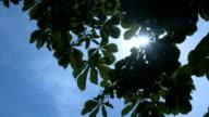 Sun shines through green leaves video