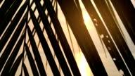 Sun shines through palm leaf video
