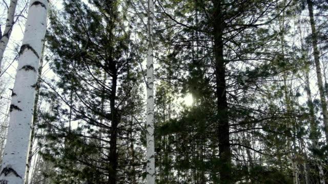Sun shines through the trees video