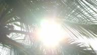 Sun shines through tropical palm leaves video