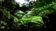 CLOSE UP: Sun shining on green canopies of beautiful fern in overgrown forest video