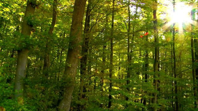 POV Sun Shining Through Green Forest Tracking Shot video