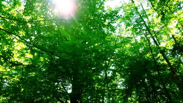 Sun Shining Through Green Forest Tracking Shot video